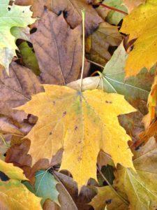 Осень Алгебра Слова